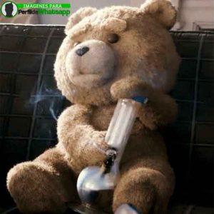 imágenes de TED el OSO (14)
