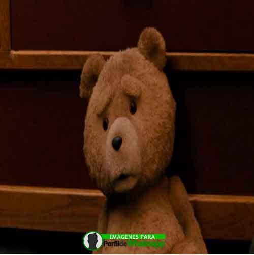 imágenes de TED el OSO (2)