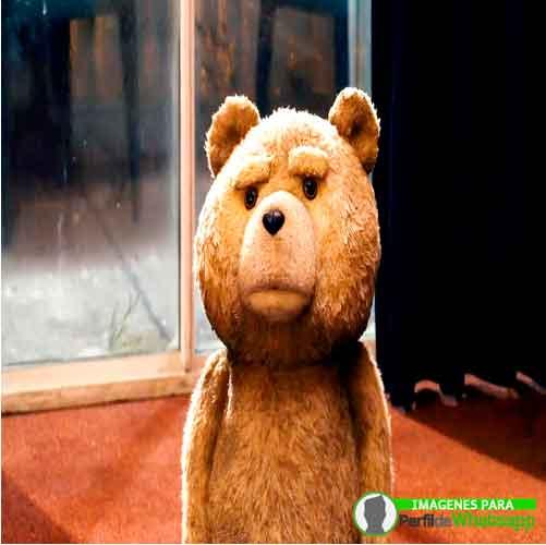 imágenes de TED el OSO (5)