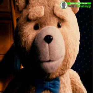 imágenes de TED el OSO (6)