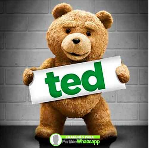 imágenes de TED el OSO (7)