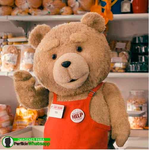 imágenes de TED el OSO (9)