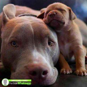 imágenes de perritos tiernos (1)