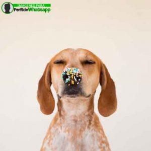 imágenes de perritos tiernos (10)