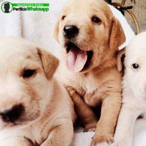 imágenes de perritos tiernos (18)