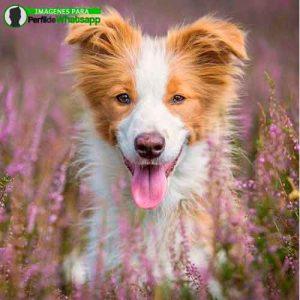 imágenes de perritos tiernos (19)