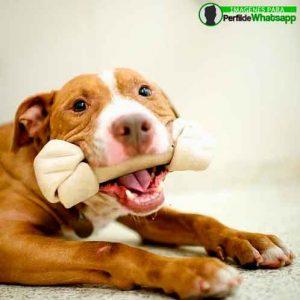 imágenes de perritos tiernos (2)