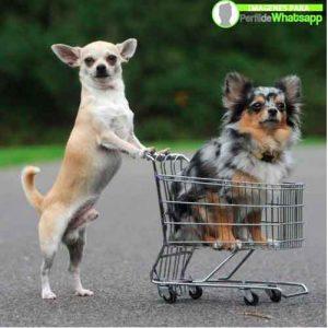 imágenes de perritos tiernos (20)