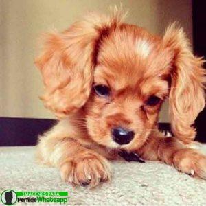 imágenes de perritos tiernos (21)