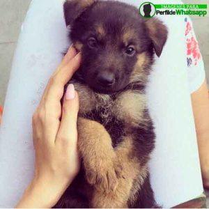 imágenes de perritos tiernos (23)