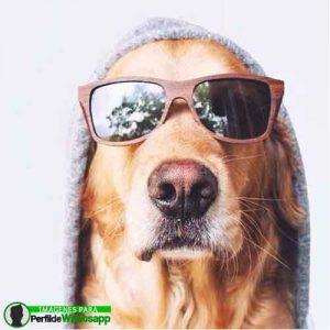 imágenes de perritos tiernos (24)