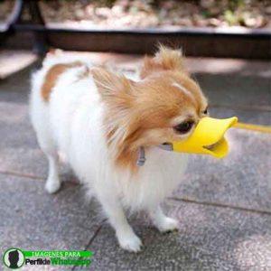 imágenes de perritos tiernos (26)