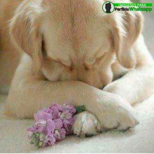 imágenes de perritos tiernos (3)