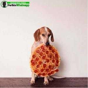 imágenes de perritos tiernos (4)