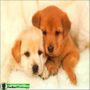 imágenes de perritos tiernos (5)