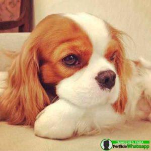 imágenes de perritos tiernos (6)