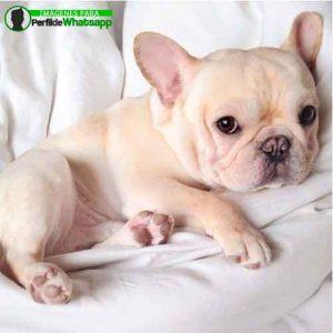 imágenes de perritos tiernos (7)