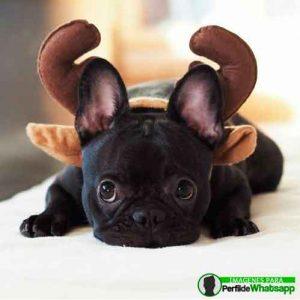 imágenes de perritos tiernos (8)