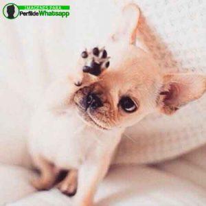 imágenes de perritos tiernos (9)