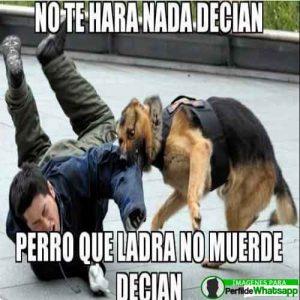 perros-14