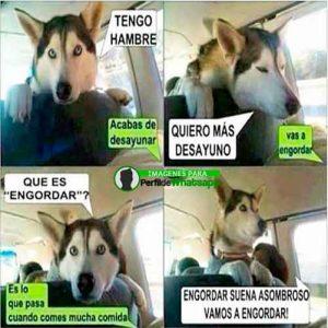 perros-17