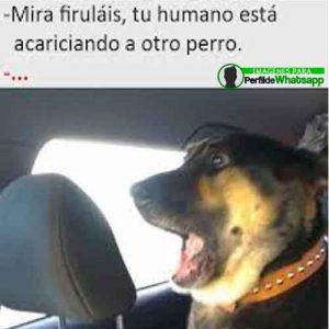 perros-24