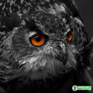 imagenes-en-blanco-y-negro-para-decargar-gratis