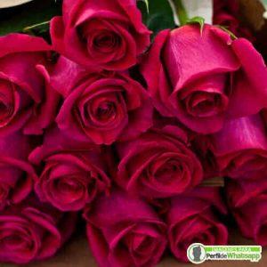 fotos con rosas