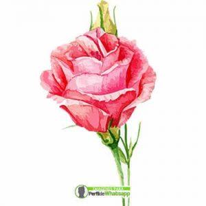 imagenes con rosas para compartir
