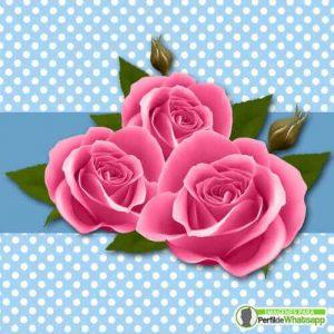 imagenes de perfil para whatsapp de rosas