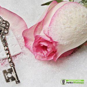 imagenes de rosas bellas