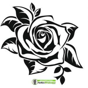 imagenes de rosas blanca y negras