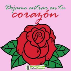 imagenes de rosas caricatura