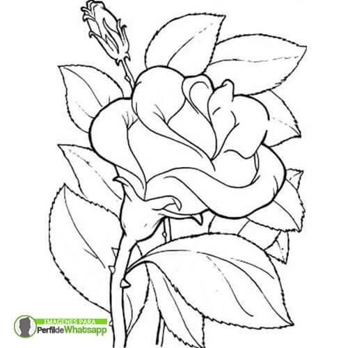Imágenes De Rosas Rojas Hermosas Gratis