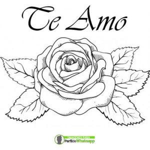 imagenes de rosas para imprimir y colorear