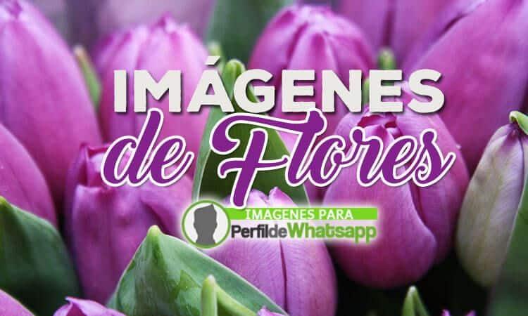 Imagenes De Flores Lindas Ver Imagenes
