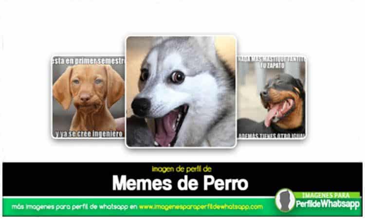 perros con memes