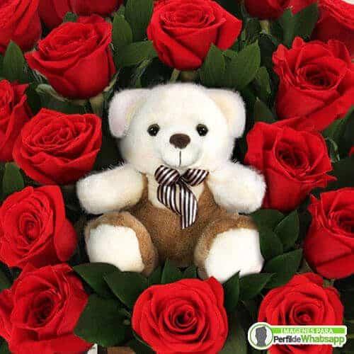 foto de perfil de rosas