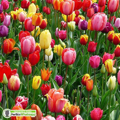 fotos de flores coloridas para descargar