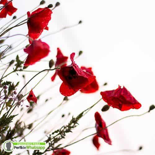 fotos de flores coloridas para redes sociales