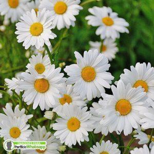 fotos de flores para descargar