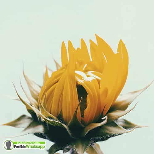 fotos de flores para redes sociales