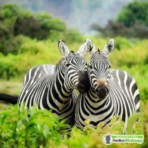 fotos tiernas de animales salvajes