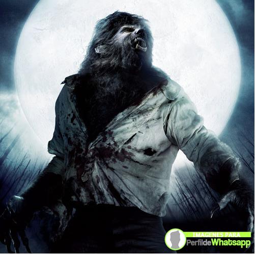 hombre lobo 24
