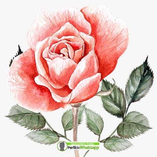 imagenes con rosas hermosas