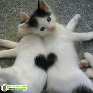 imagenes curiosas de gatos