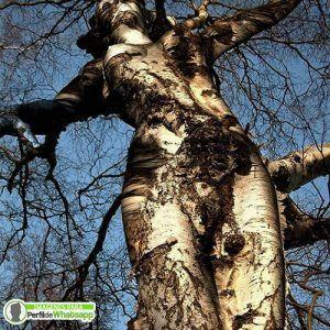 imagenes curiosas e interesantes de la naturaleza