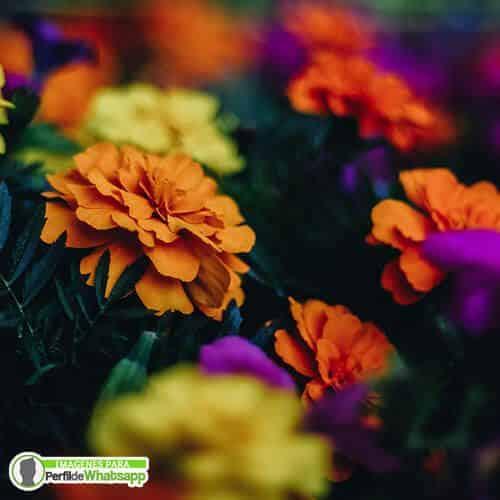 imagenes de flores coloridas para redes sociales