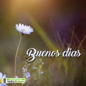imagenes de flores de buenos dias para compartir