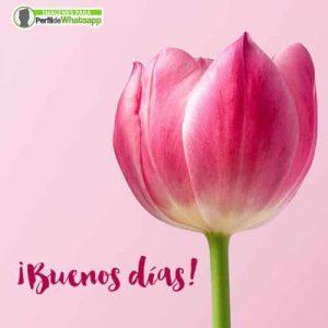 imagenes de flores de buenos dias para compartir por whatsapp